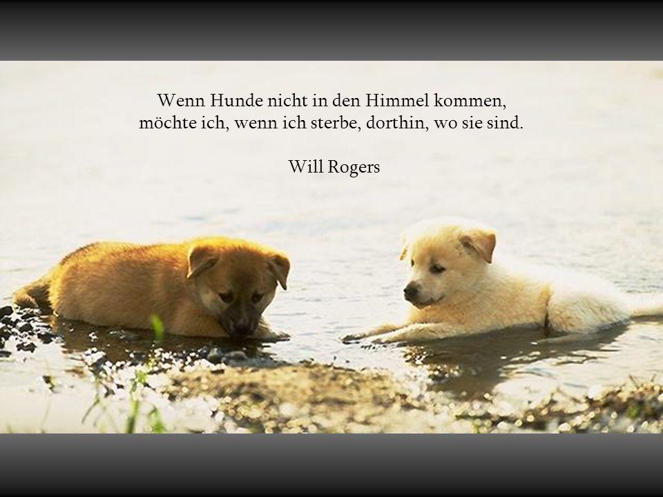 Über Hunde und Menschen