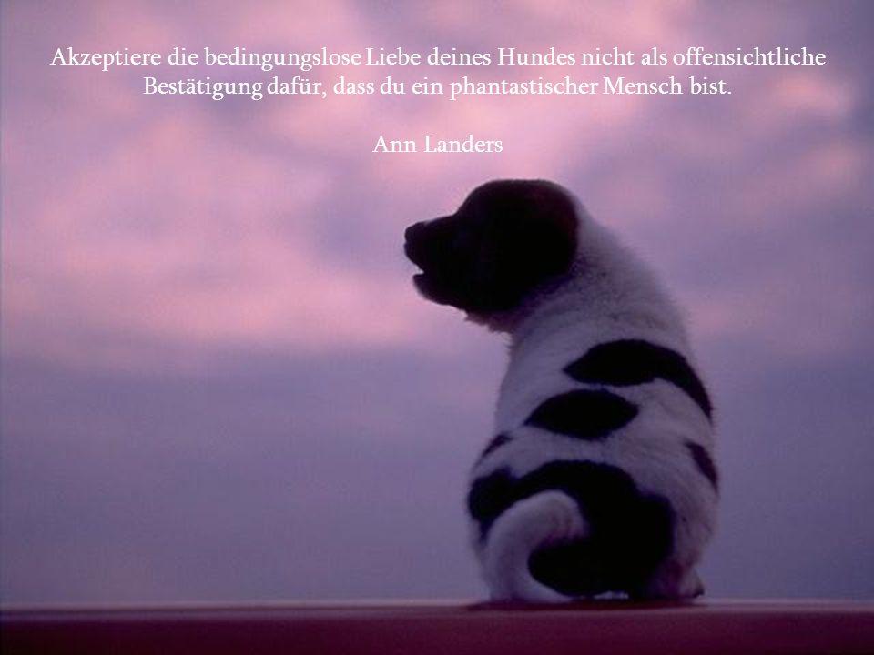 Akzeptiere die bedingungslose Liebe deines Hundes nicht als offensichtliche Bestätigung dafür, dass du ein phantastischer Mensch bist.