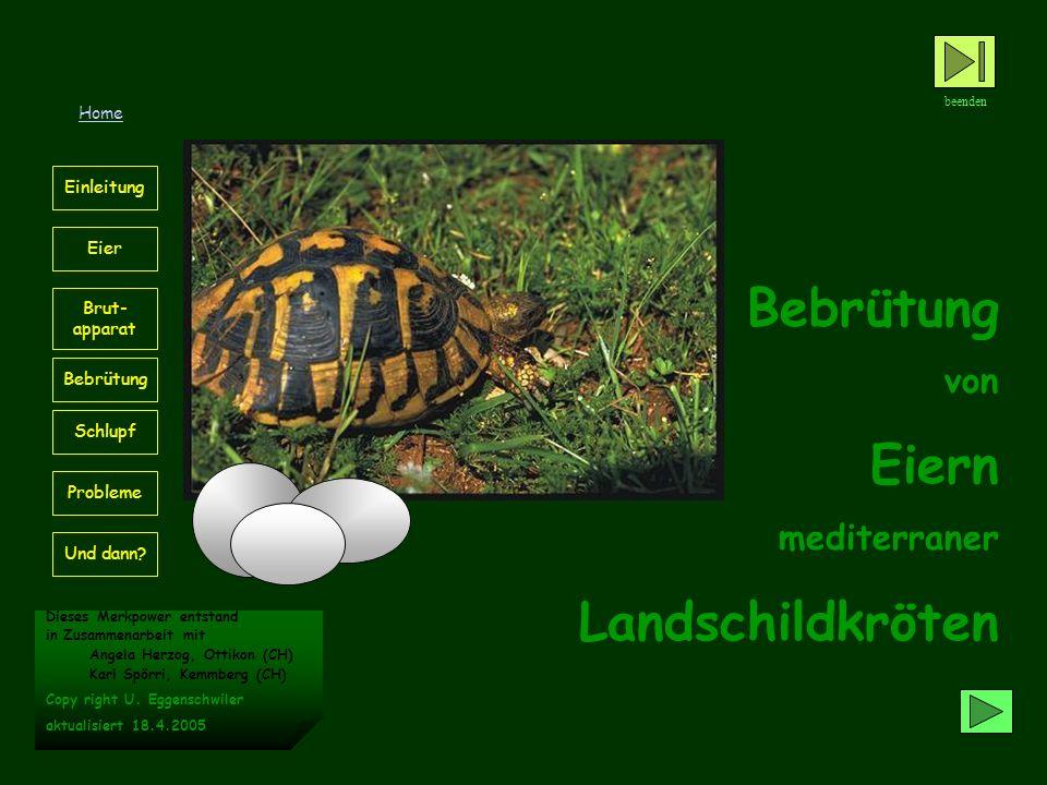 Einleitung Immer mehr Schildkrötenhaltern gelingt das erfolgreiche Ausbrüten von Schildkröteneiern.