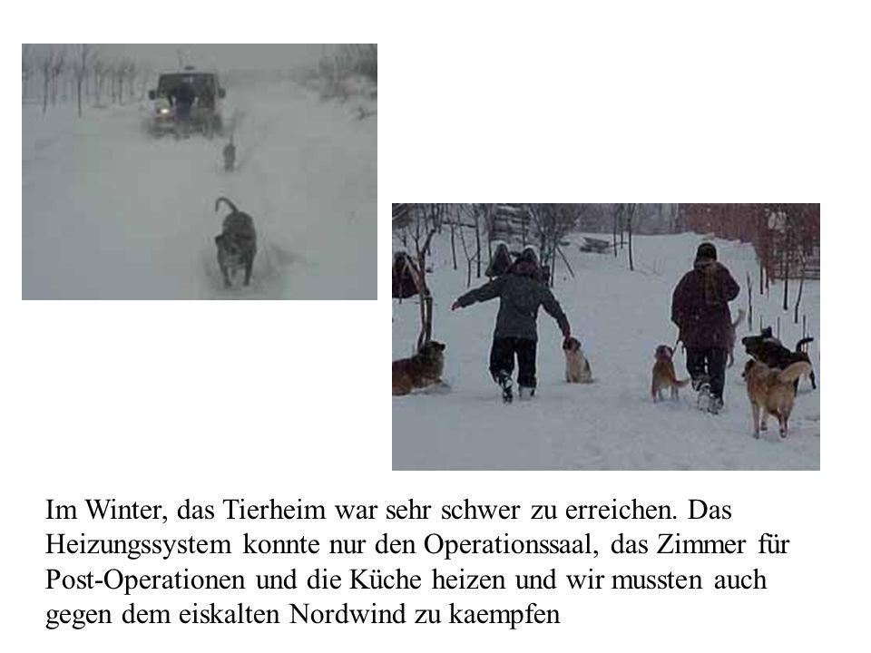 Im Winter, das Tierheim war sehr schwer zu erreichen. Das Heizungssystem konnte nur den Operationssaal, das Zimmer für Post-Operationen und die Küche