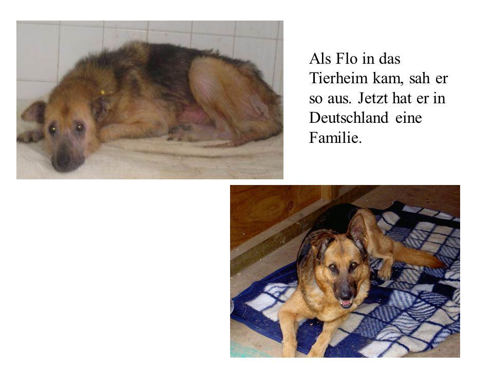 Als Flo in das Tierheim kam, sah er so aus. Jetzt hat er in Deutschland eine Familie.