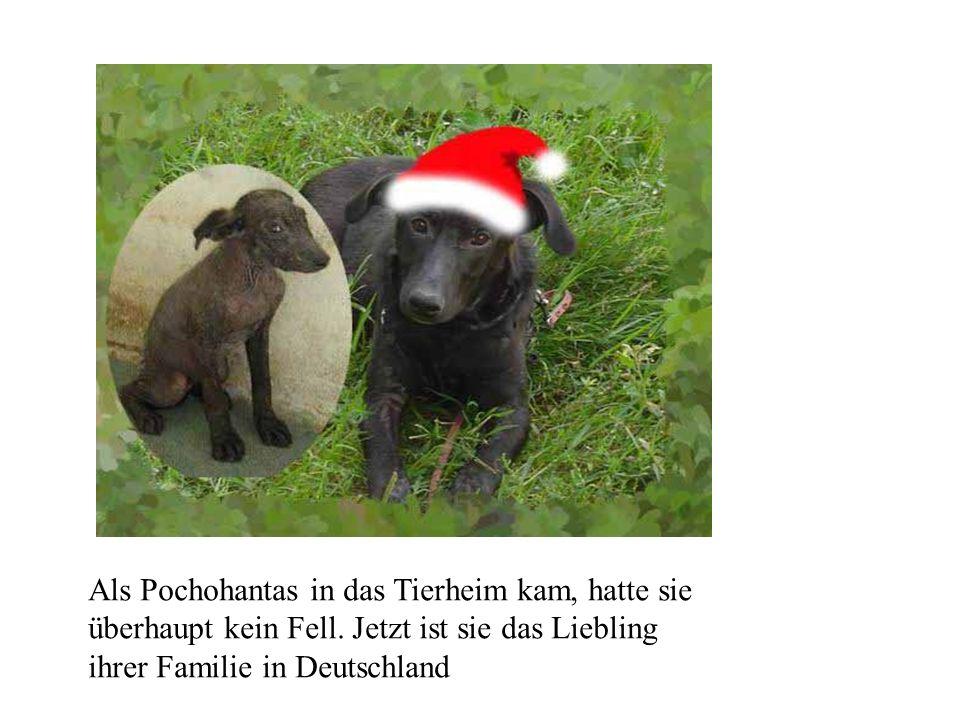 Pochohantas barınağa ilk geldiğinde hiç tüyü yoktu. Şimdi Almanyada ailesinin göz bebeği Als Pochohantas in das Tierheim kam, hatte sie überhaupt kein