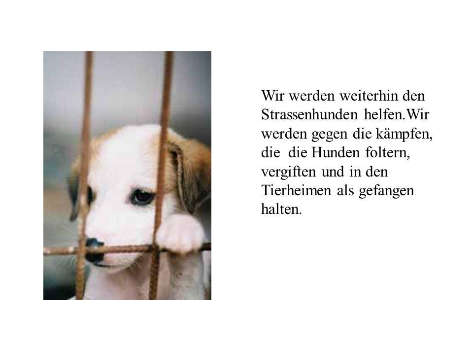Wir werden weiterhin den Strassenhunden helfen.Wir werden gegen die kämpfen, die die Hunden foltern, vergiften und in den Tierheimen als gefangen halt