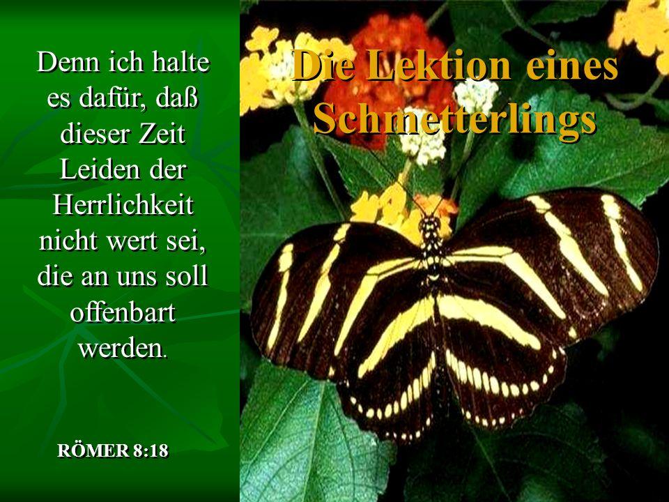 Die Lektion eines Schmetterlings Denn ich halte es dafür, daß dieser Zeit Leiden der Herrlichkeit nicht wert sei, die an uns soll offenbart werden. RÖ