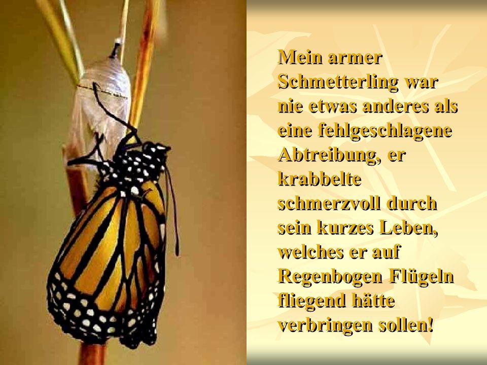Mein armer Schmetterling war nie etwas anderes als eine fehlgeschlagene Abtreibung, er krabbelte schmerzvoll durch sein kurzes Leben, welches er auf R