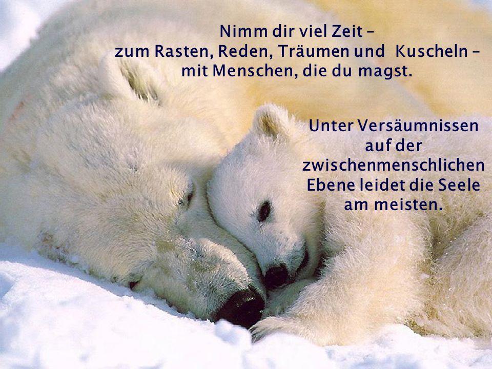 Warum nun diese Eisbären … .