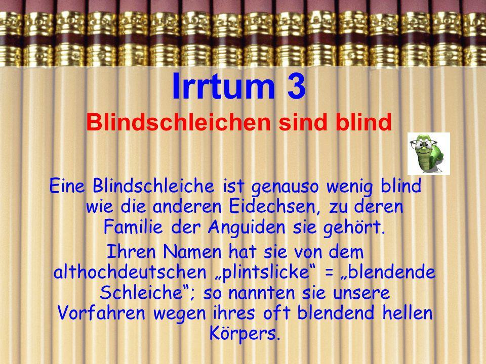 Irrtum 3 Blindschleichen sind blind Eine Blindschleiche ist genauso wenig blind wie die anderen Eidechsen, zu deren Familie der Anguiden sie gehört. I