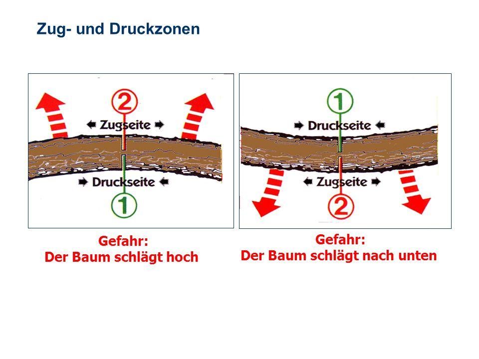 OBM Stefan Schiavulli www.ff-blofeld.de Ausbildung Feuerwehr Blofeld Folie 19 Zug- und Druckzonen Zug- und Druckzonen von Bäumen und Balken beachten !