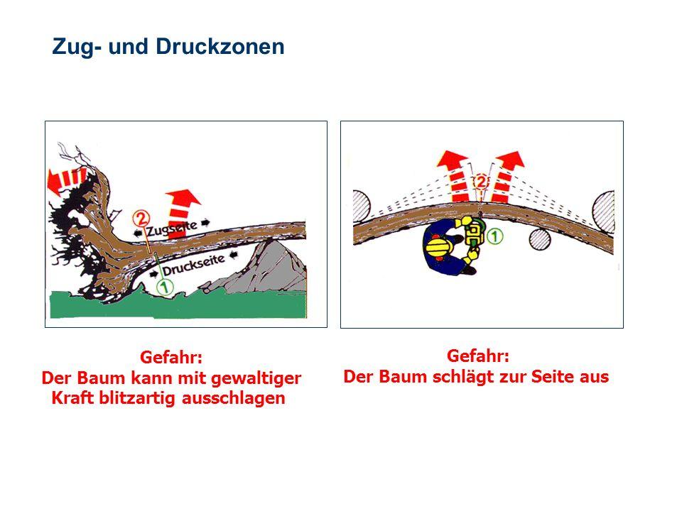 OBM Stefan Schiavulli www.ff-blofeld.de Ausbildung Feuerwehr Blofeld Folie 20 Zug- und Druckzonen Gefahr: Der Baum schlägt hoch Gefahr: Der Baum schlä