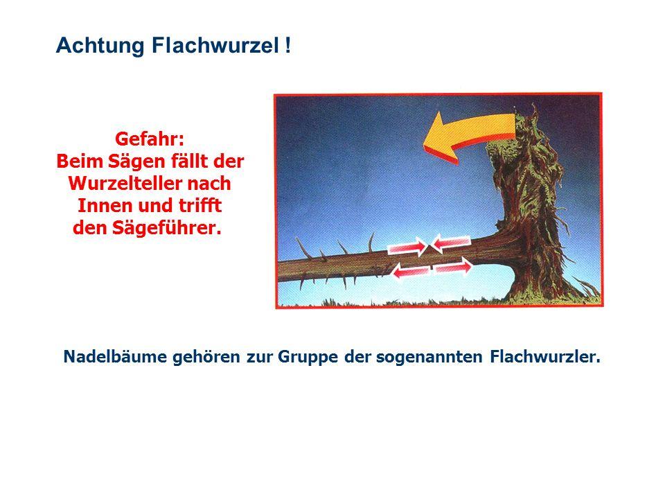 OBM Stefan Schiavulli www.ff-blofeld.de Ausbildung Feuerwehr Blofeld Folie 21 Zug- und Druckzonen Gefahr: Der Baum kann mit gewaltiger Kraft blitzarti