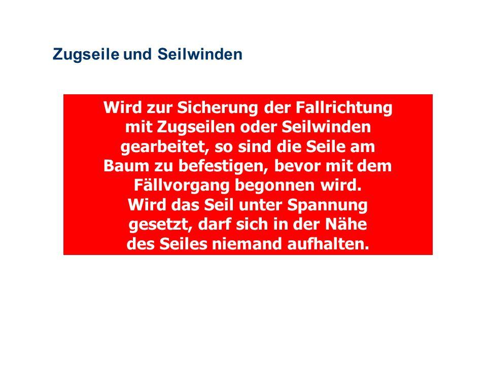 OBM Stefan Schiavulli www.ff-blofeld.de Ausbildung Feuerwehr Blofeld Folie 22 Achtung Flachwurzel ! Gefahr: Beim Sägen fällt der Wurzelteller nach Inn
