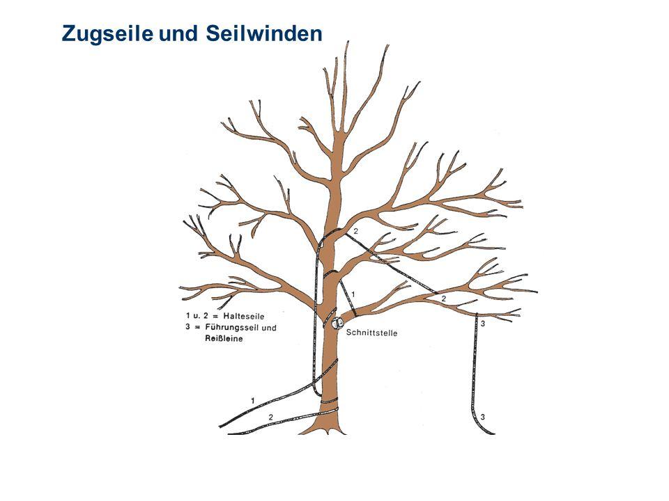 OBM Stefan Schiavulli www.ff-blofeld.de Ausbildung Feuerwehr Blofeld Folie 23 Zugseile und Seilwinden Wird zur Sicherung der Fallrichtung mit Zugseile