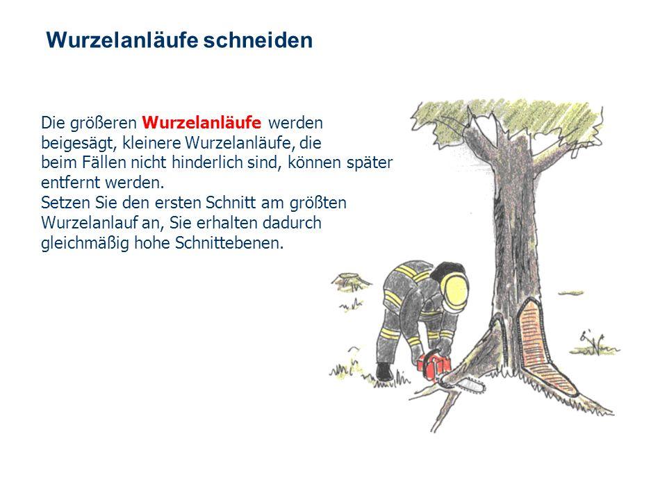 OBM Stefan Schiavulli www.ff-blofeld.de Ausbildung Feuerwehr Blofeld Folie 28 Arbeitstechnik Bei der Schnittführung kann der frei geführte Schnitt (1)
