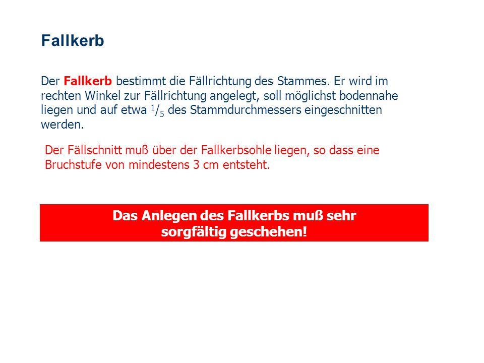 OBM Stefan Schiavulli www.ff-blofeld.de Ausbildung Feuerwehr Blofeld Folie 29 Wurzelanläufe schneiden Die größeren Wurzelanläufe werden beigesägt, kle