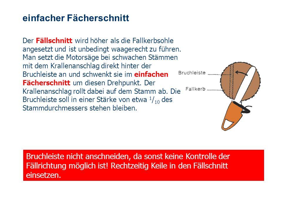OBM Stefan Schiavulli www.ff-blofeld.de Ausbildung Feuerwehr Blofeld Folie 33 Baum fällt !!! Vor dem Fällschnitt hat der Sägeführer laut zu rufen: Ach