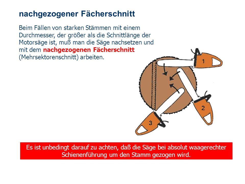 OBM Stefan Schiavulli www.ff-blofeld.de Ausbildung Feuerwehr Blofeld Folie 34 einfacher Fächerschnitt Der Fällschnitt wird höher als die Fallkerbsohle