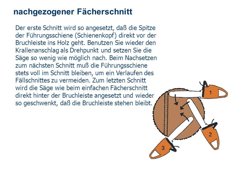 OBM Stefan Schiavulli www.ff-blofeld.de Ausbildung Feuerwehr Blofeld Folie 35 nachgezogener Fächerschnitt Beim Fällen von starken Stämmen mit einem Du