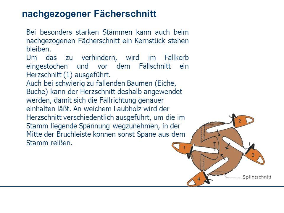 OBM Stefan Schiavulli www.ff-blofeld.de Ausbildung Feuerwehr Blofeld Folie 36 nachgezogener Fächerschnitt Der erste Schnitt wird so angesetzt, daß die