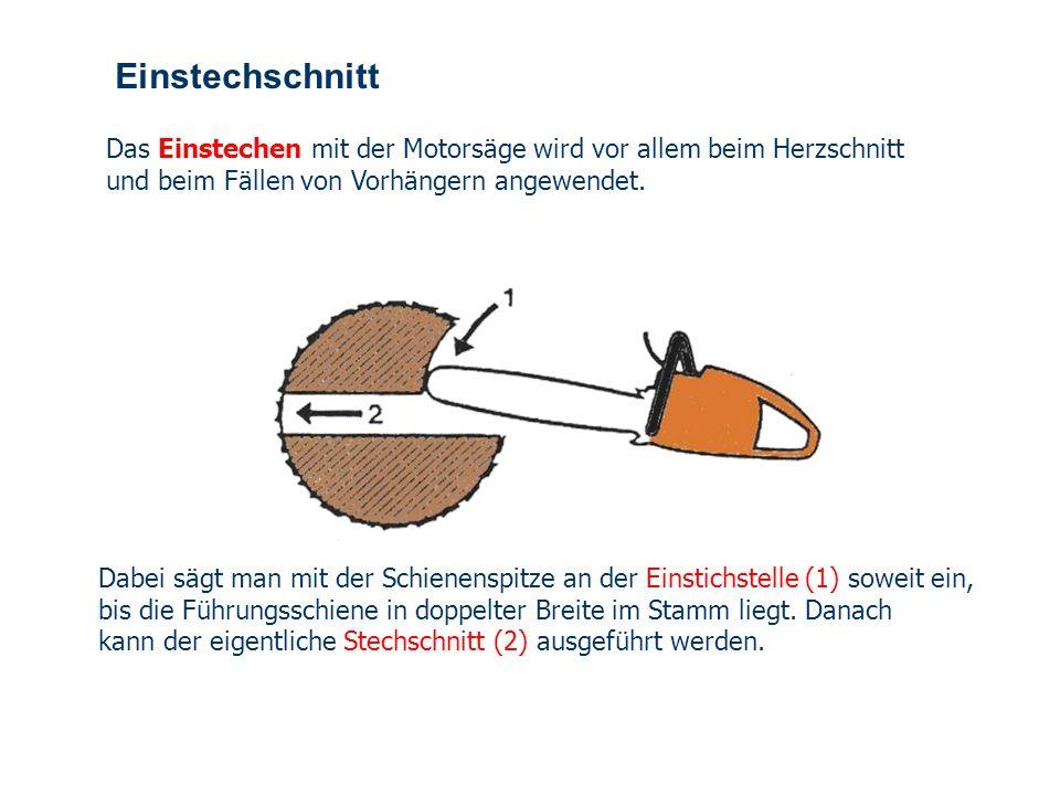 OBM Stefan Schiavulli www.ff-blofeld.de Ausbildung Feuerwehr Blofeld Folie 37 nachgezogener Fächerschnitt Bei besonders starken Stämmen kann auch beim