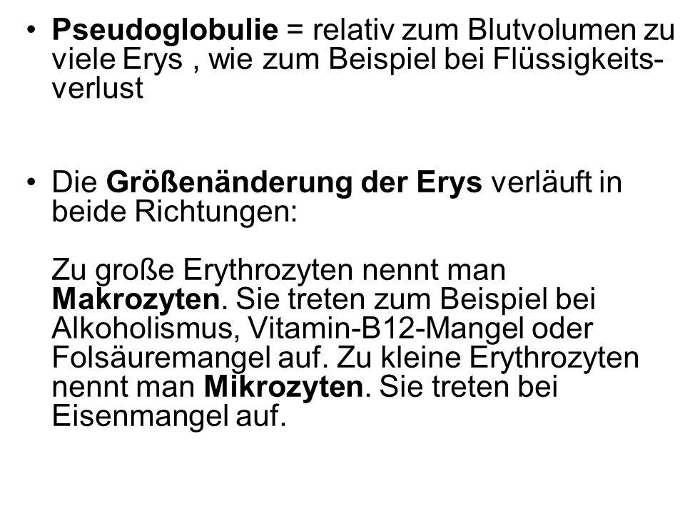 Pseudoglobulie = relativ zum Blutvolumen zu viele Erys, wie zum Beispiel bei Flüssigkeits- verlust Die Größenänderung der Erys verläuft in beide Richt
