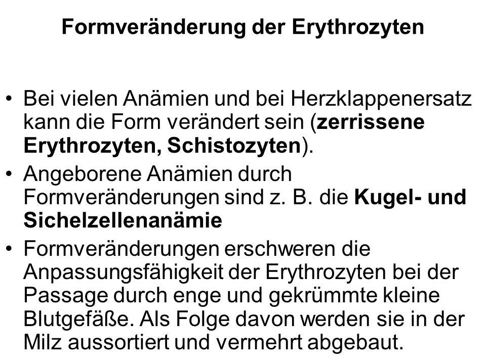 Formveränderung der Erythrozyten Bei vielen Anämien und bei Herzklappenersatz kann die Form verändert sein (zerrissene Erythrozyten, Schistozyten). An