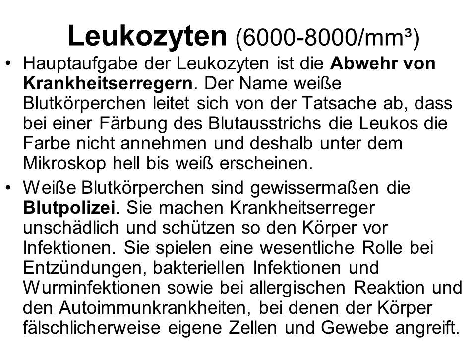 Leukozyten (6000-8000/mm³) Hauptaufgabe der Leukozyten ist die Abwehr von Krankheitserregern. Der Name weiße Blutkörperchen leitet sich von der Tatsac