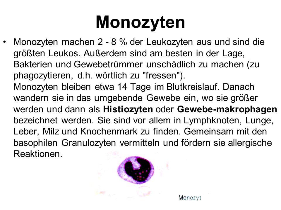 Monozyten Monozyten machen 2 - 8 % der Leukozyten aus und sind die größten Leukos. Außerdem sind am besten in der Lage, Bakterien und Gewebetrümmer un