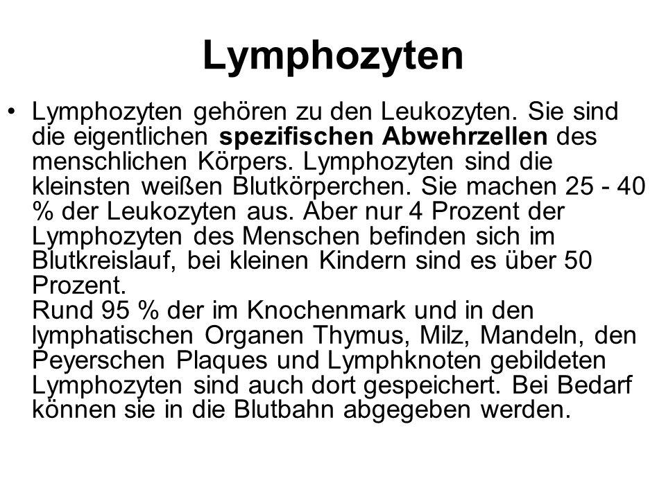 Lymphozyten Lymphozyten gehören zu den Leukozyten. Sie sind die eigentlichen spezifischen Abwehrzellen des menschlichen Körpers. Lymphozyten sind die