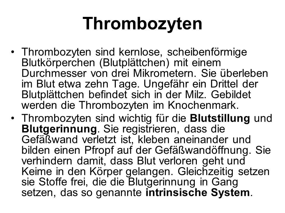 Thrombozyten Thrombozyten sind kernlose, scheibenförmige Blutkörperchen (Blutplättchen) mit einem Durchmesser von drei Mikrometern. Sie überleben im B