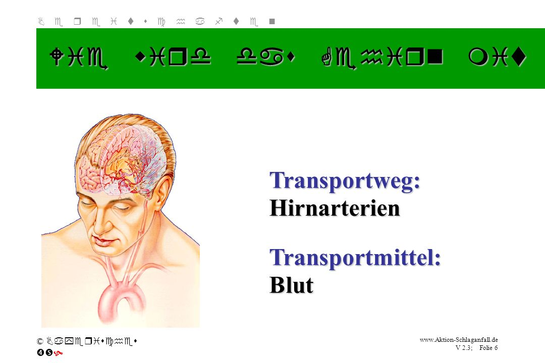 Klicken Sie, um das Titelformat zu bearbeiten B e r e i t s c h a f t e n www.Aktion-Schlaganfall.de V 2.3; Folie 6 © Bayerisches Wie wird das Gehirn