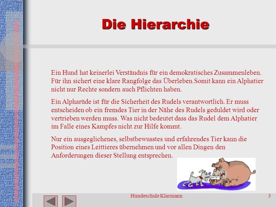 Hundeschule Klarmann2 Grundsätze Der Hund verlangt nach einer klaren Rangfolge innerhalb der Hierarchie des Rudels/ der Familie Das Alphatier hat Rech