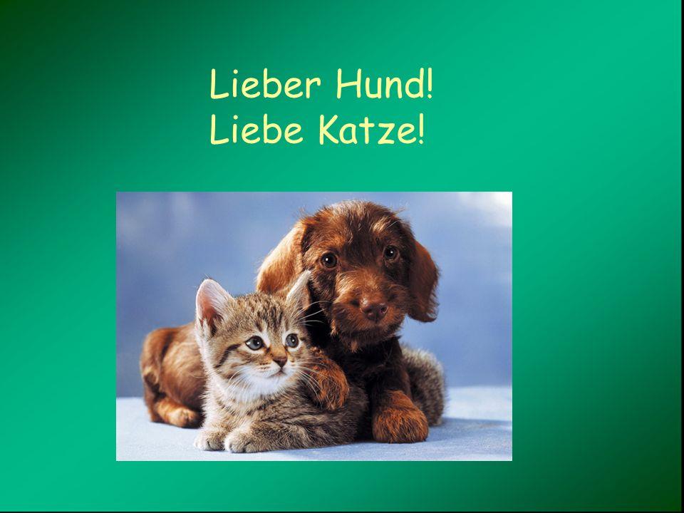 Lieber Hund! Liebe Katze!