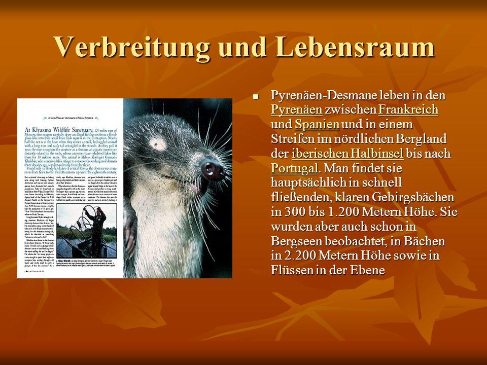 Merkmale Russische Desmane erreichen eine Kopfrumpflänge von 18 bis 21 Zentimeter, der Schwanz ist ebenso lang (17 bis 21 Zentimeter) und seitlich abg