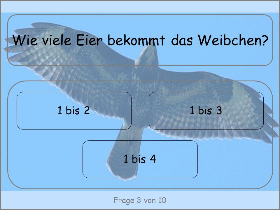Frage 3 von 10 Wie viele Eier bekommt das Weibchen? 1 bis 21 bis 3 1 bis 4