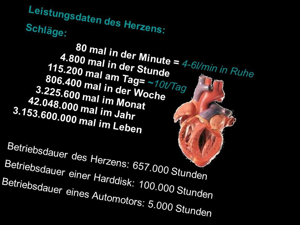 Anhang: Eingriffe an den Herzklappen Extrakorporaler Kreislauf (Herz-Lungen-Maschine): Das venöse Blut fließt von den Hohlvenen in ein Reservoir.