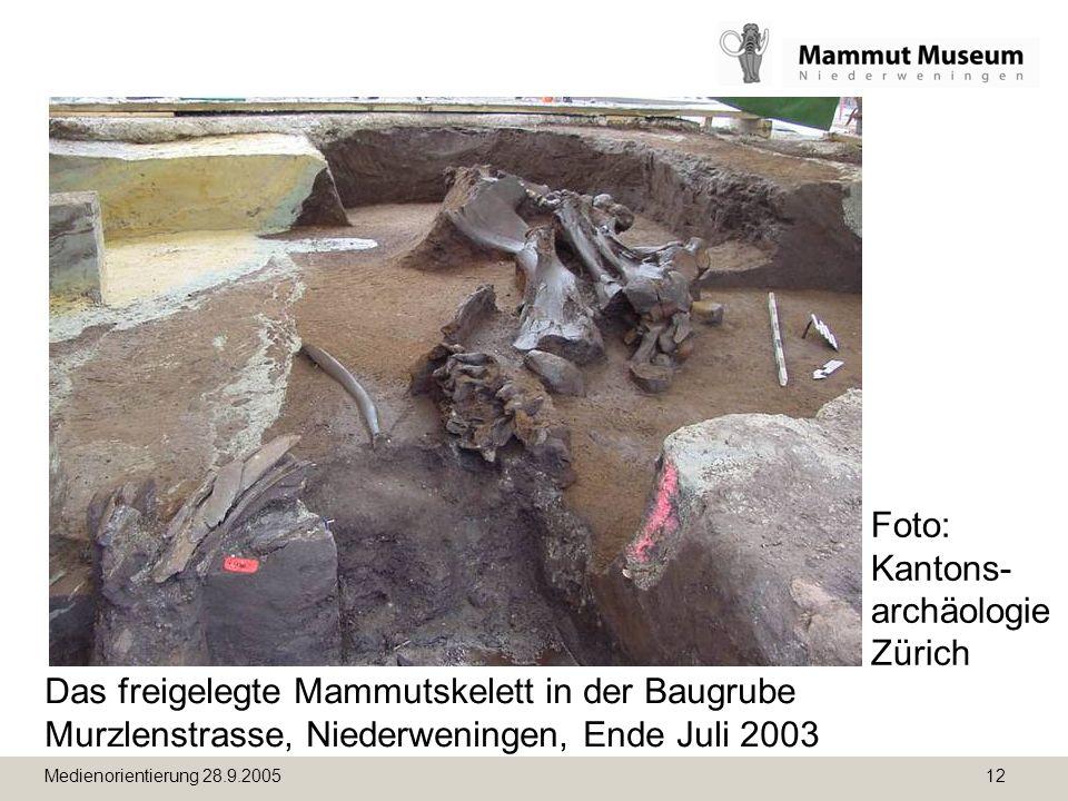 Medienorientierung 28.9.2005 12 Das freigelegte Mammutskelett in der Baugrube Murzlenstrasse, Niederweningen, Ende Juli 2003 Foto: Kantons- archäologie Zürich