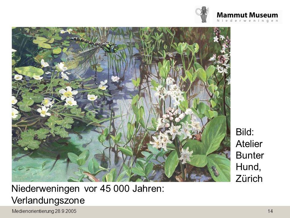 Medienorientierung 28.9.2005 14 Niederweningen vor 45 000 Jahren: Verlandungszone Bild: Atelier Bunter Hund, Zürich