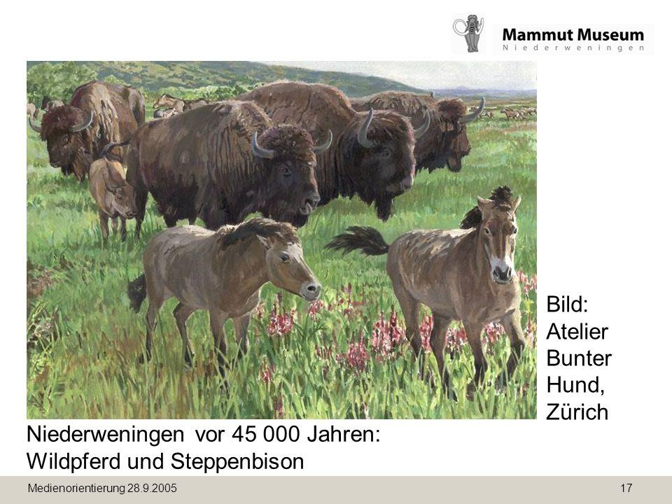 Medienorientierung 28.9.2005 17 Niederweningen vor 45 000 Jahren: Wildpferd und Steppenbison Bild: Atelier Bunter Hund, Zürich