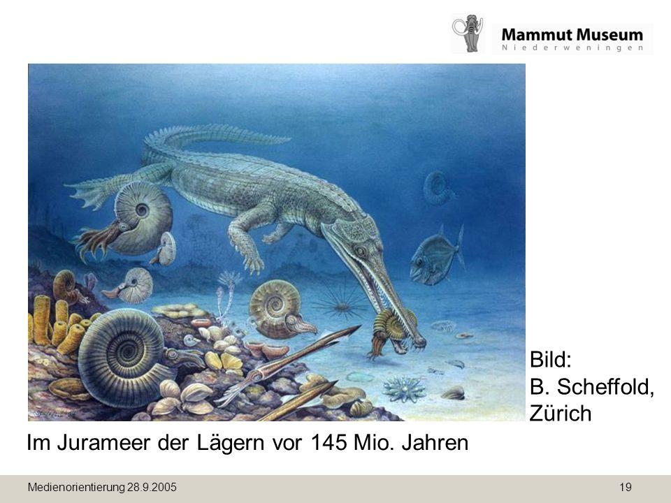 Medienorientierung 28.9.2005 19 Im Jurameer der Lägern vor 145 Mio. Jahren Bild: B. Scheffold, Zürich