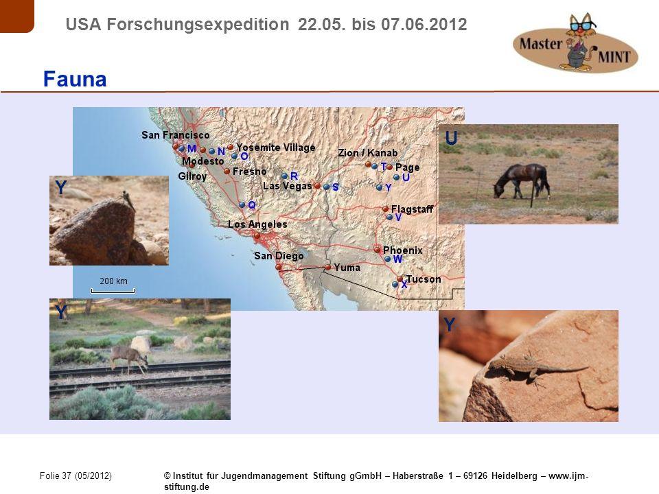 Folie 37 (05/2012) © Institut für Jugendmanagement Stiftung gGmbH – Haberstraße 1 – 69126 Heidelberg – www.ijm- stiftung.de USA Forschungsexpedition 22.05.