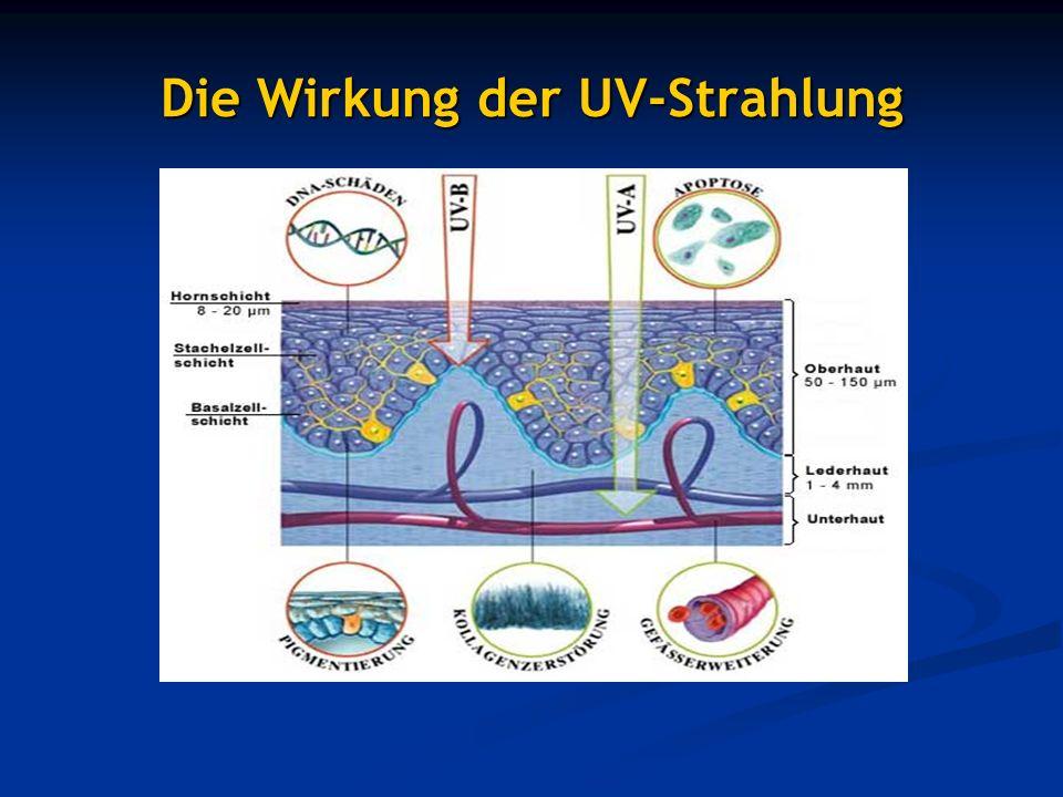 Die Wirkung der UV-Strahlung