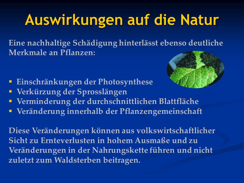 Auswirkungen auf die Natur Eine nachhaltige Schädigung hinterlässt ebenso deutliche Merkmale an Pflanzen: Einschränkungen der Photosynthese Verkürzung