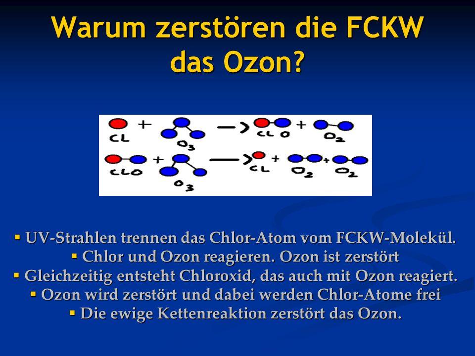 Warum zerstören die FCKW das Ozon? UV-Strahlen trennen das Chlor-Atom vom FCKW-Molekül. UV-Strahlen trennen das Chlor-Atom vom FCKW-Molekül. Chlor und