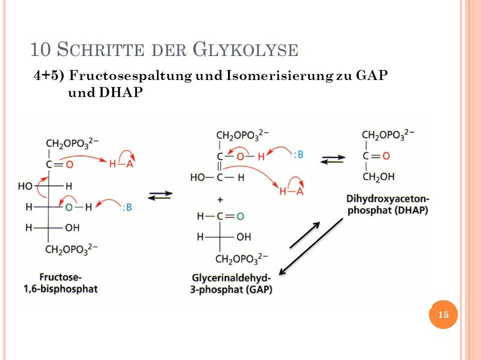 4+5) Fructosespaltung und Isomerisierung zu GAP und DHAP 10 S CHRITTE DER G LYKOLYSE 15