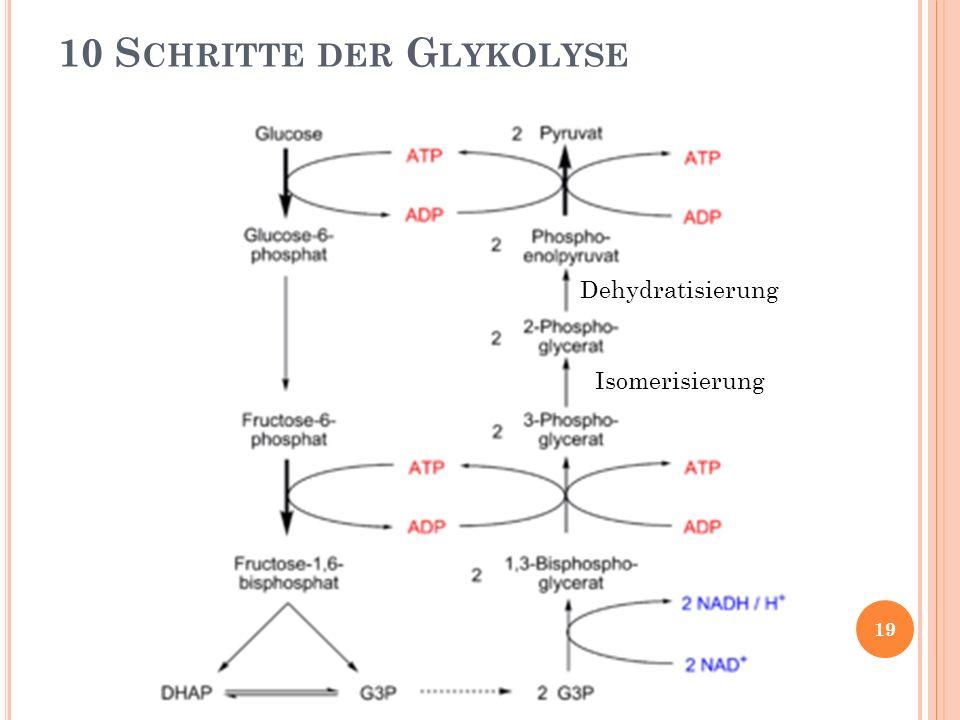 10 S CHRITTE DER G LYKOLYSE Isomerisierung Dehydratisierung 19