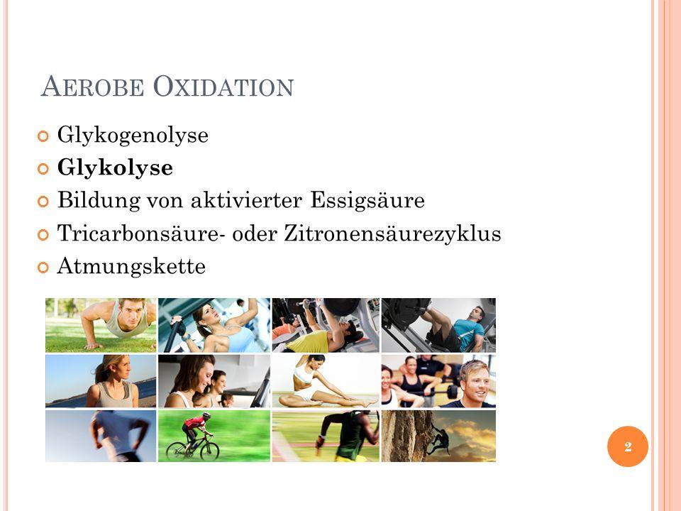 A EROBE O XIDATION Glykogenolyse Glykolyse Bildung von aktivierter Essigsäure Tricarbonsäure- oder Zitronensäurezyklus Atmungskette 2