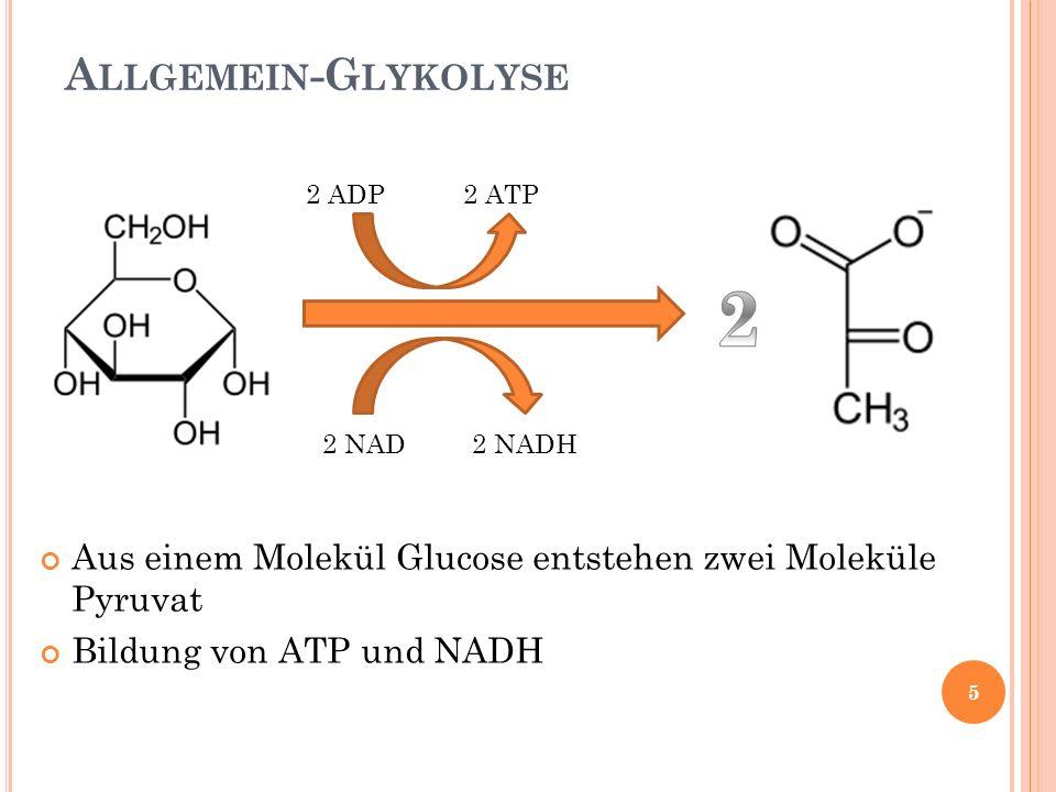 A LLGEMEIN -G LYKOLYSE Aus einem Molekül Glucose entstehen zwei Moleküle Pyruvat Bildung von ATP und NADH 2 ADP 2 ATP 2 NAD 2 NADH 5
