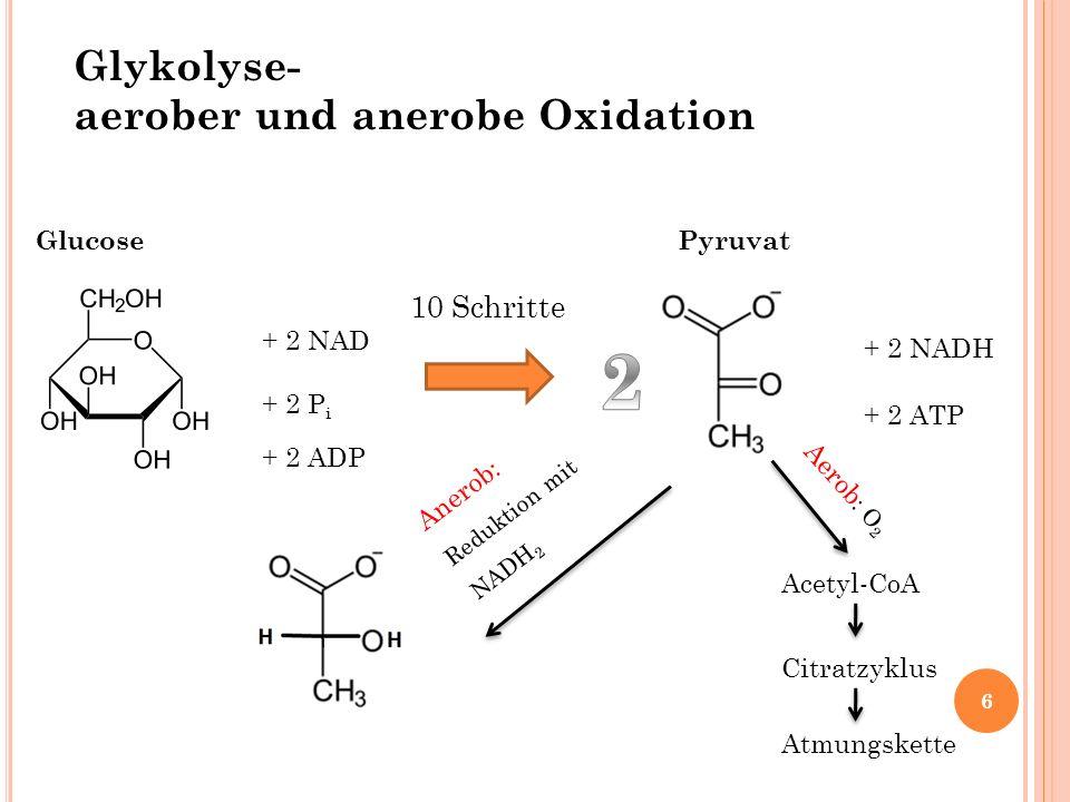 + 2 NAD + 2 P i + 2 ADP + 2 NADH + 2 ATP Glykolyse- aerober und anerobe Oxidation 10 Schritte Anerob: Reduktion mit NADH 2 Aerob : O 2 Glucose Pyruvat