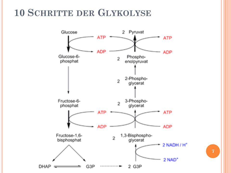 1) Phosphorylierung der Glucose 10 S CHRITTE DER G LYKOLYSE Glucose α-Glcuose-6-phosphat 8