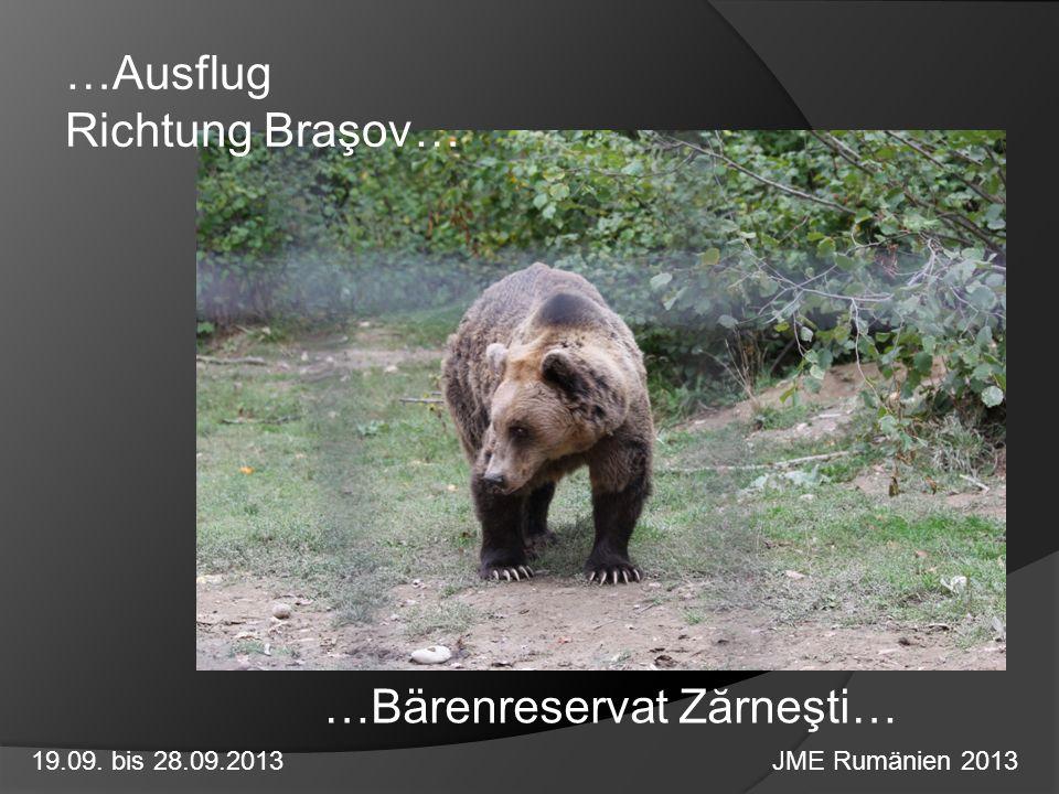 …Ausflug Richtung Braşov… 19.09. bis 28.09.2013 JME Rumänien 2013 …Bärenreservat Zărneşti…